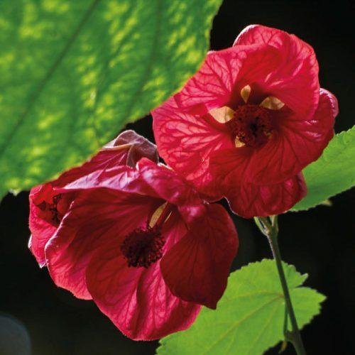 jardinGeorgesDelasselle_fleur-2