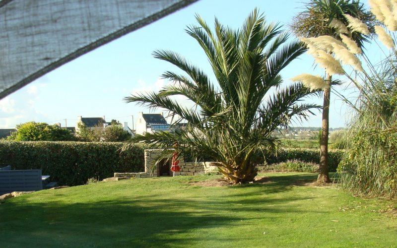 location de vacances piscine bretagne palmier